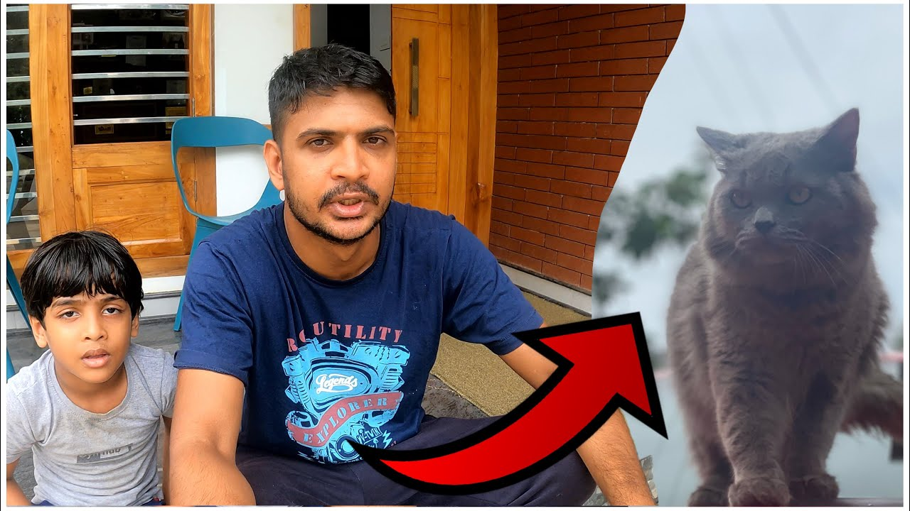 We lost our cat | അവസാനം CCTV ക്യാമറയിൽ കണ്ട കാര്യം !