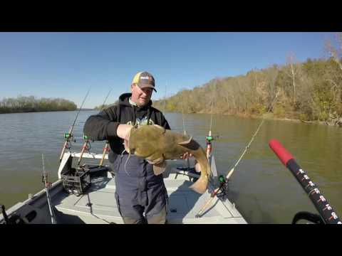Basic fall flathead catfishing tips