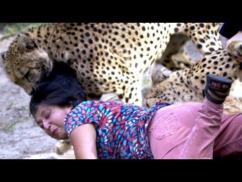 When Cheetahs Attack