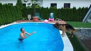 German shepherd the pro volleyball playe...