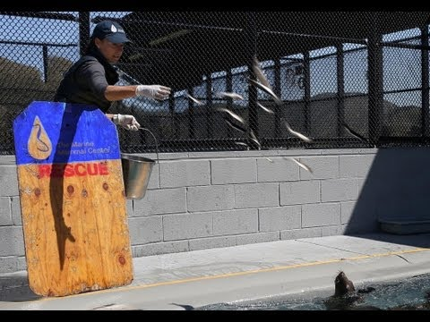 Visit The Marine Mammal Center and The Golden Gate National Parks!