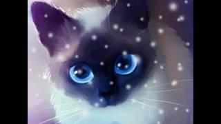 МакSим кошка