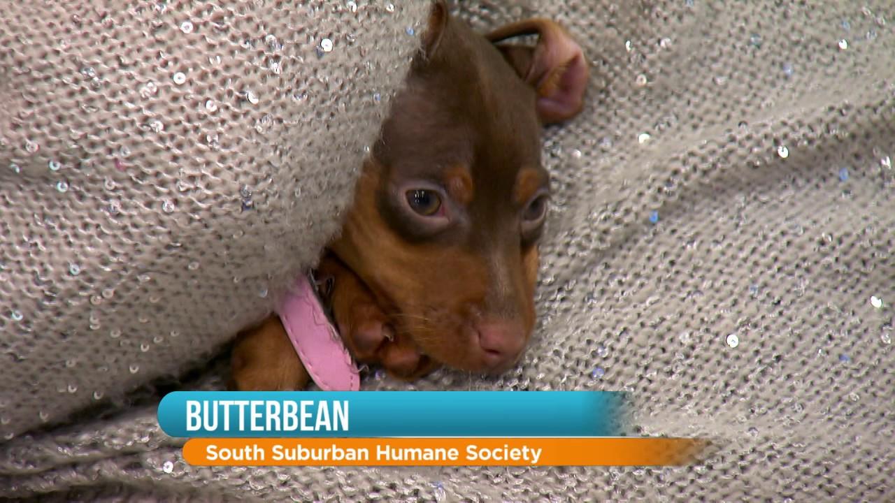 Rescue Dog: Meet Butterbean