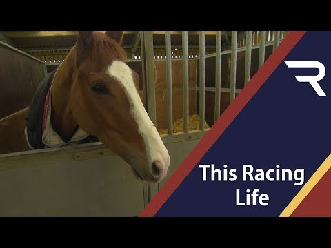 Point To Point And Pony Racing - This Racing Life - Racing TV
