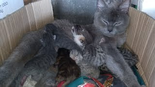 Спасение котят. Кошка родила 8 котят и бросила. Котята милые