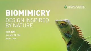 Biomimicry: Design Inspired by Nature