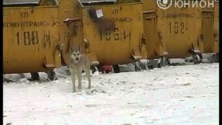 В Макеевке бездомные собаки нападают на людей