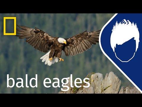 Bald Eagles (Episode 3) | Wild_life With Bertie Gregory