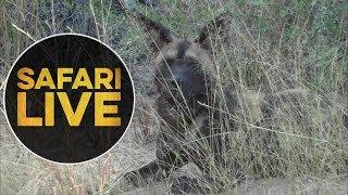 safariLIVE - Sunrise Safari - June, 11. 2018 thumbnail