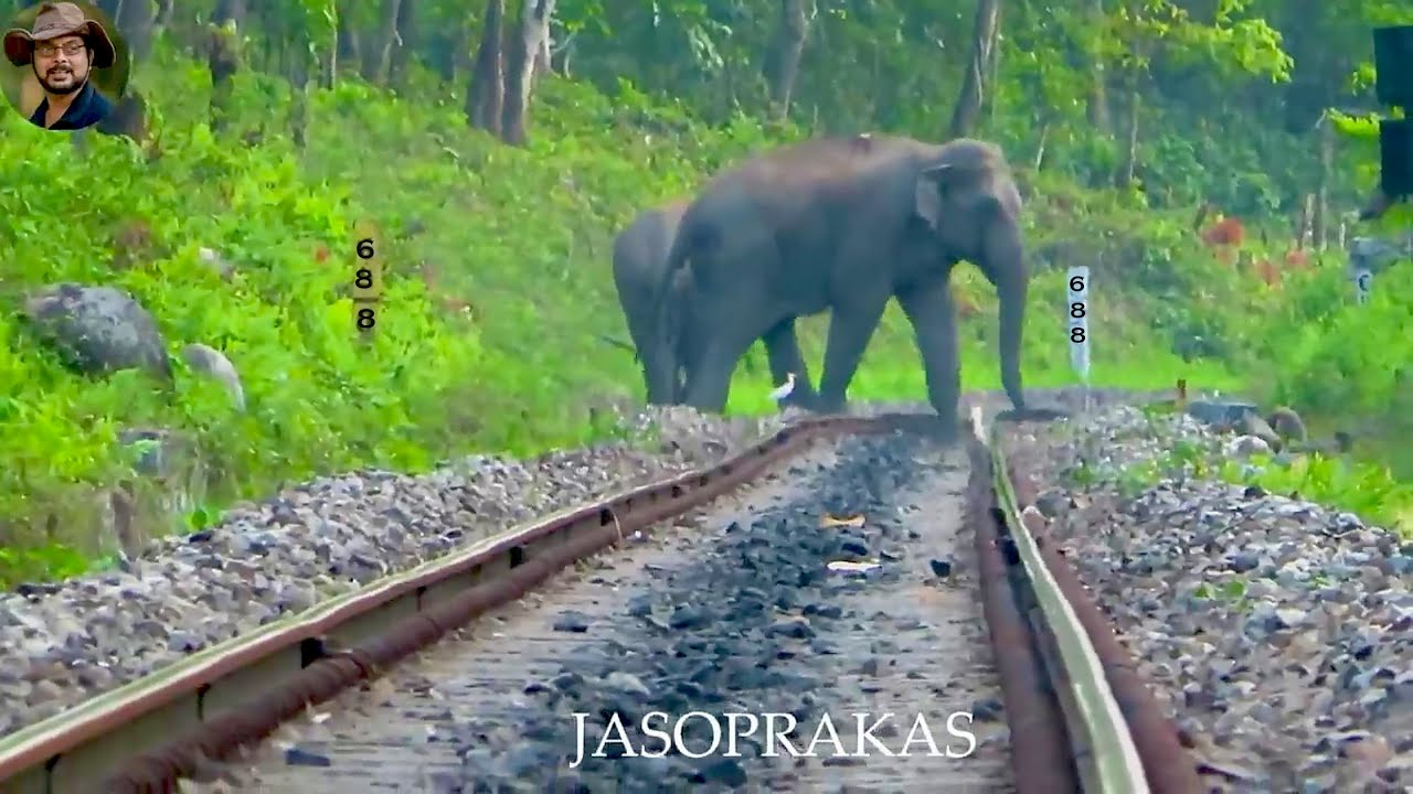 688 Most Dangerous Bend of Railway Track for Wildlife(OS).