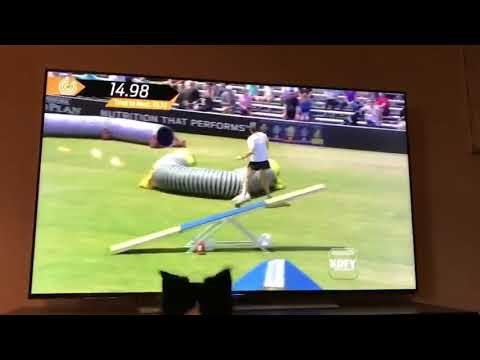 Andy Woods - Dog Watches Herself Compete On Television
