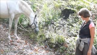Balade  cheval en liberté en forêt août 2014