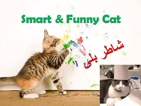 Smart and Funny Cats | Looks like they are trained