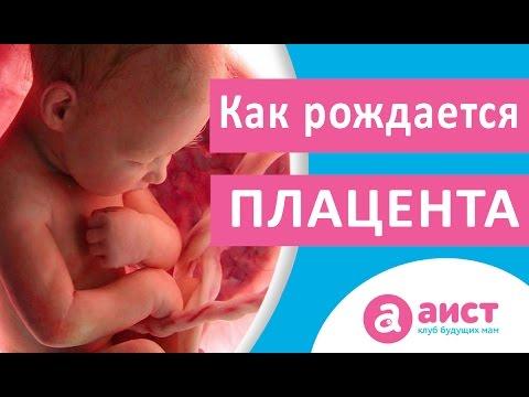 Рождение плаценты или как родить послед
