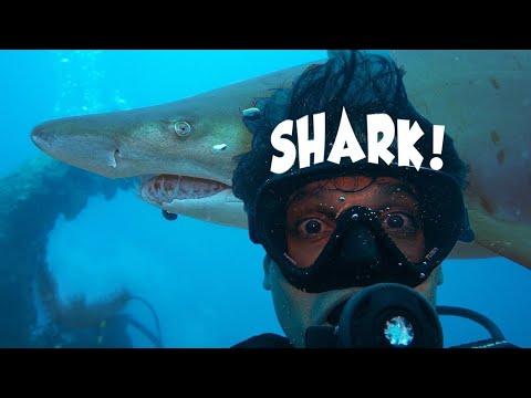 Tokyo Scuba Diving Adventure | OGASAWARA ★ ONLY In JAPAN