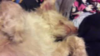 My dog 🐶