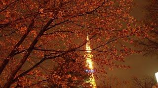 桜🌸の写真みて!札幌移住85日目。 thumbnail