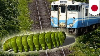 Delays: Train stopped by herd of unruly caterpillars trying to get to the other side - TomoNews