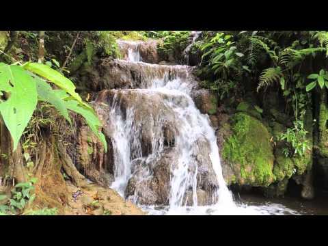 🐸 Sons da Natureza - Cachoeira Natural (1 hora) - Para Relaxamento, Meditação, Dormir ou Estudar