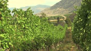 Orofino Vineyards | Purveyors Of Premium Wine