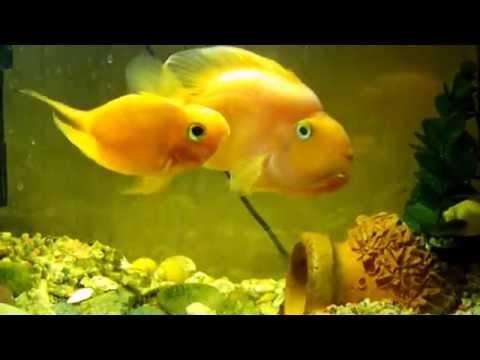 Маленькие аквариумные рыбки смотреть онлайн бесплатно