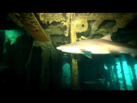 sand-tiger-shark-dive---aeolus-shipwreck,-north-carolina-scuba