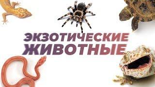 Экзотические животные. Рептилии