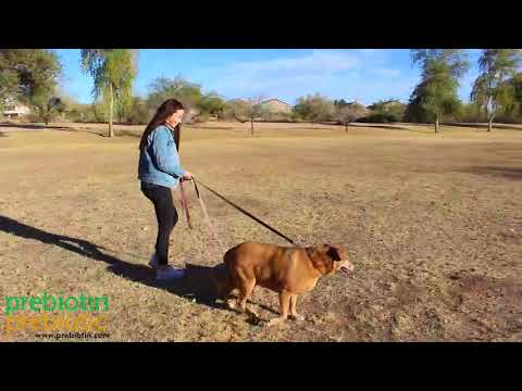 Health benefits of owning a dog - Microbiome Minutes