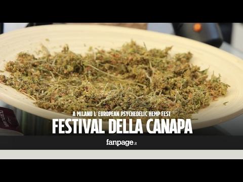 Festival della cannabis a Milano: tra biscottini, artigianato e marijuana senza sballo