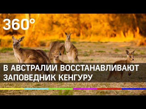Вопрос: Можно ли вывозить кенгуру из Австралии?
