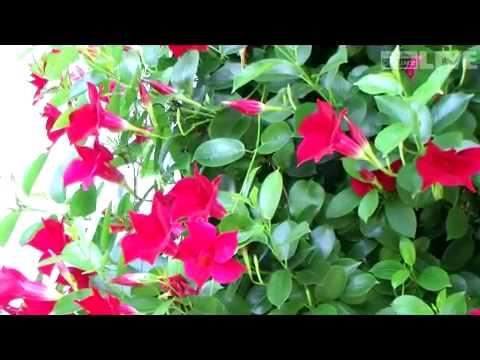Überwinterung der Gartenpflanzen