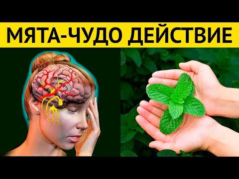ЛИСТЬЯ ЖИЗНИ! Пару листьев МЯТЫ, и забудьте о БОЛЯЧКАХ навсегда!