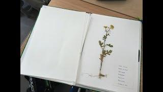 Réalisation d\'un herbier de plantes à fleurs