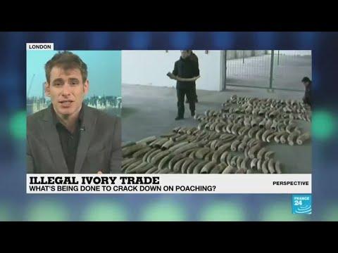 فرانس 24:'Europe has become the world's largest exporter of ivory'
