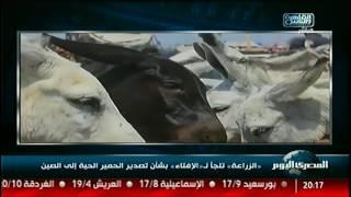 «الزراعة» تلجأ لـ«الإفتاء» بشأن تصدير الحمير الحية إلى الصين