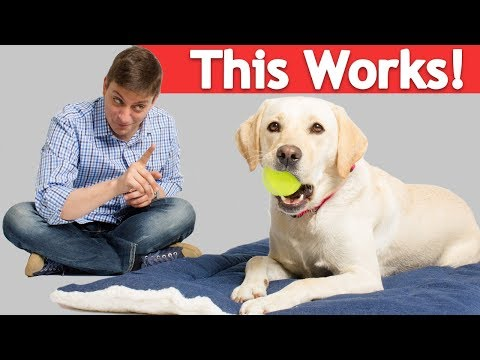 4-annoying-dog-habits-you-can-stop-with-a-simple-crate-pad