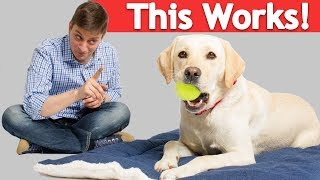4 Annoying Dog Habits you can Stop with a Simple Crate Pad