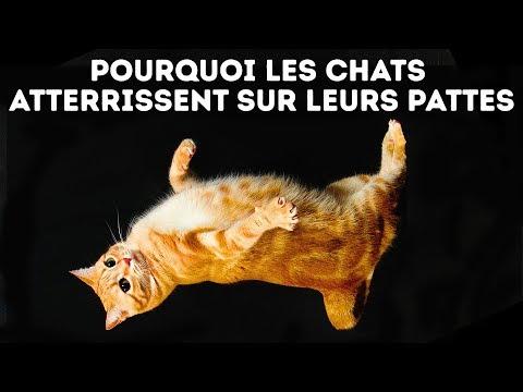 Voilà Pourquoi Les Chats Retombent Toujours Sur Leurs Pattes