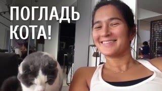 Погладь кота! [Лучшие видео ADME]