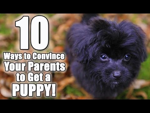 10 Ways to Convince Your Parents to Get a Dog | Parody of