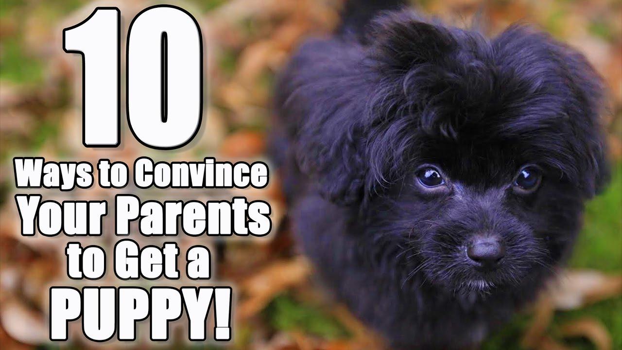 A parent's guide to 'Secret Life of Pets 2'