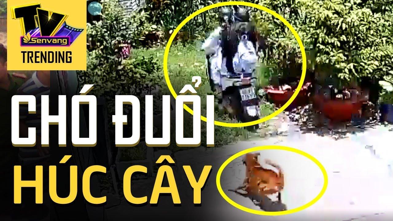 2 nữ sinh bị CHÓ RƯỢT lao thẳng xe vào gốc cây chuối khiến cả xóm được phen hú vía