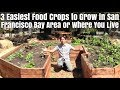 3 Easiest Food Crops You Can Grow in San Francisco Bay Area or Where you Live
