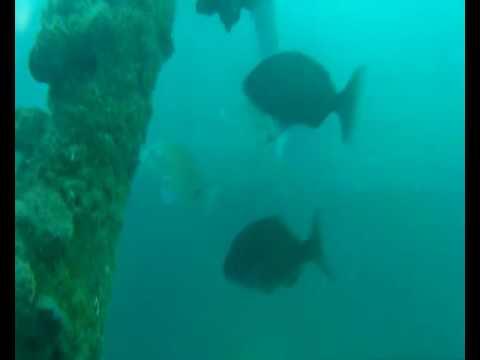 U.B.M.C.M BUCEANDO EN Ex-NRP Almeida de Carvalho A527 Oceanographic Vessel