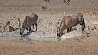 Namibia 2016:     The Waterholes of Central Etosha