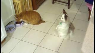 СМОТРЕТЬ ВСЕМ!!! Коты издеваются над собаками
