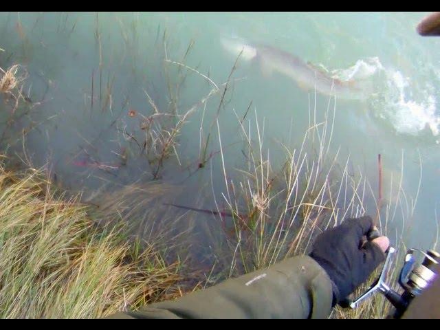 Pesca de lucio de buen tamaño en riada con señuelo artificial (Segundo lucio) Videos De Viajes