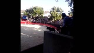 Taureau Kangourou arènes de Vendargues [19/07/15]
