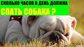Сколько часов в день должна спать собака?