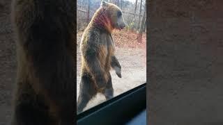 에버랜드 사파리 곰 묘기?